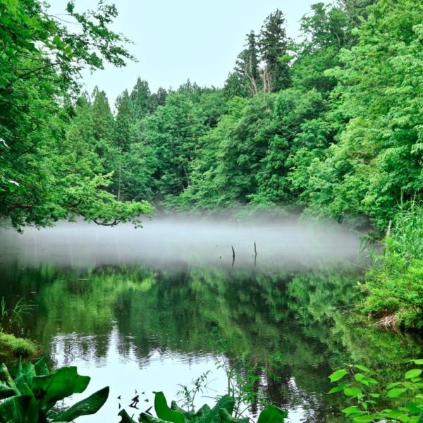 龍の住まう池