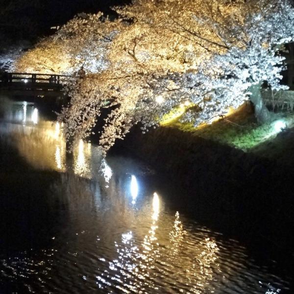 お堀と夜桜2021 その2
