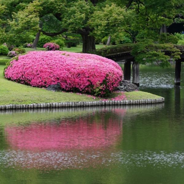 六義園:ピンクと緑の彩(回想編)✨