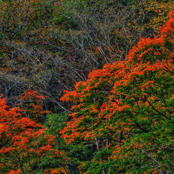 谷川の紅葉