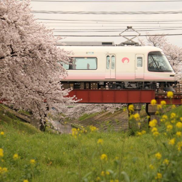 さくら (奈良県)