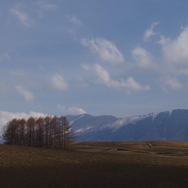 「カラマツの丘の春」