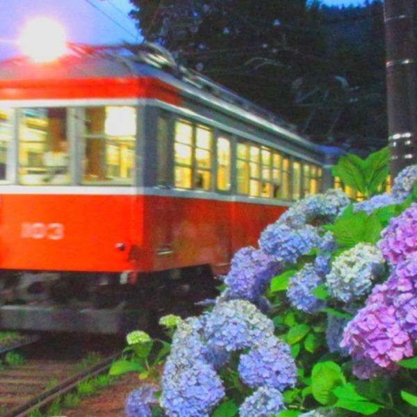 箱根登山鉄道  夜のあじさい電車