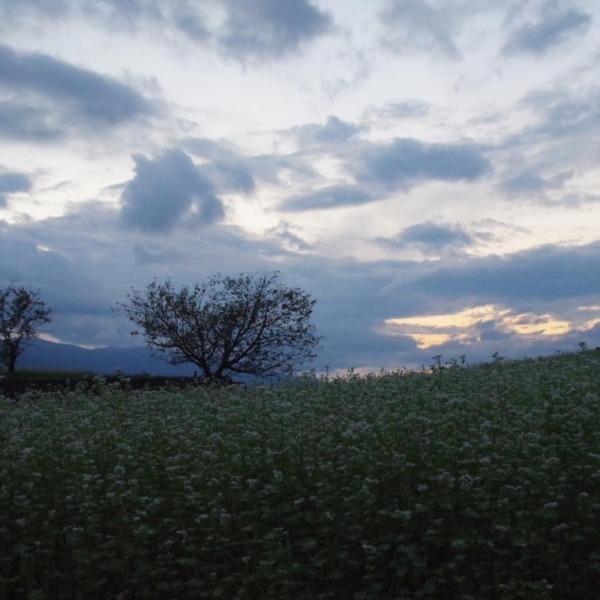「蕎麦の花と夕空」