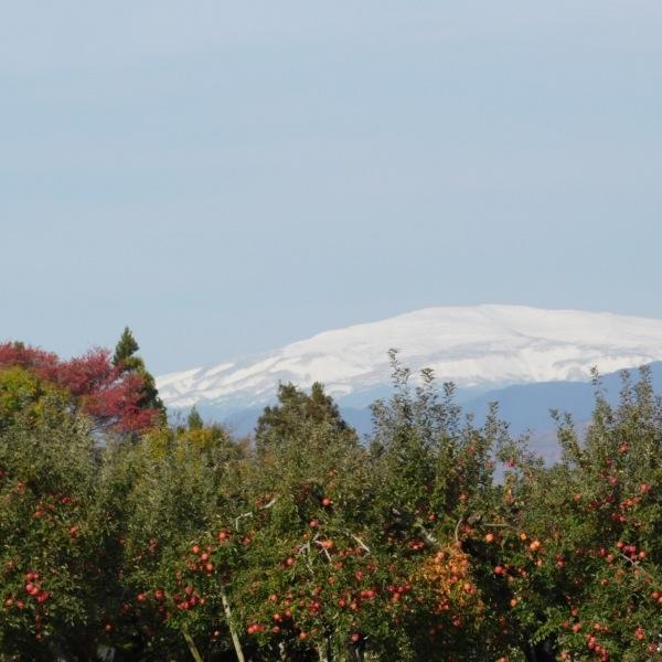 りんご畑からの月山