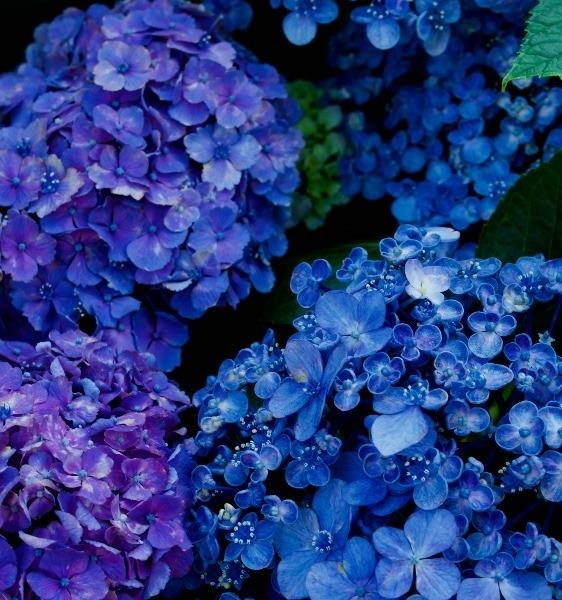 青と紫のグラデーション
