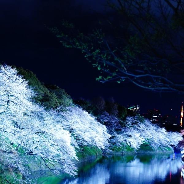 春の香り/桜開花宣言にワクワク✨