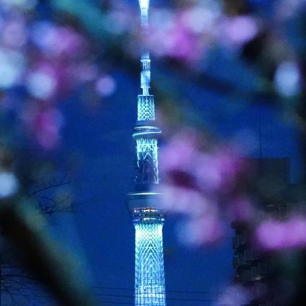河津桜2021祈り💖/スカイツリー:免許証更新
