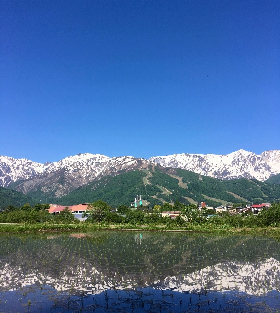 白馬連峰と田園