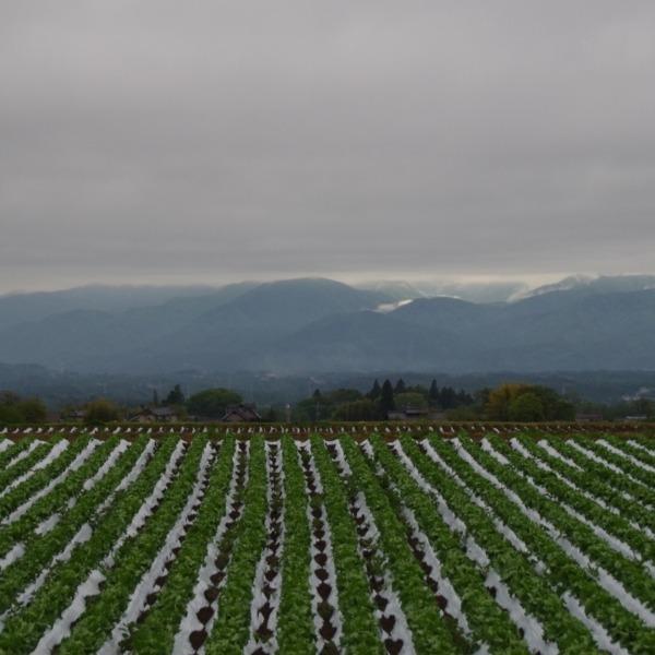 「レタス畑と曇り空の南アルプス」