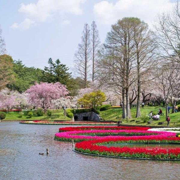 浜松フラワーパークの桜 1