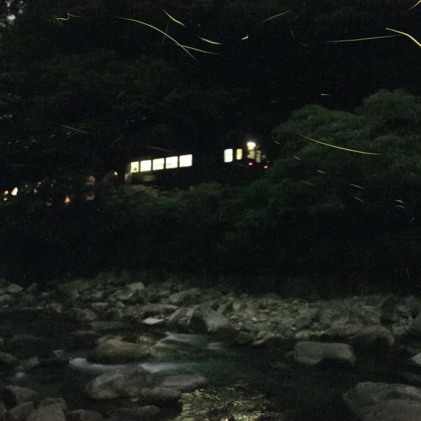 名松線とホタル 2020年6月24日