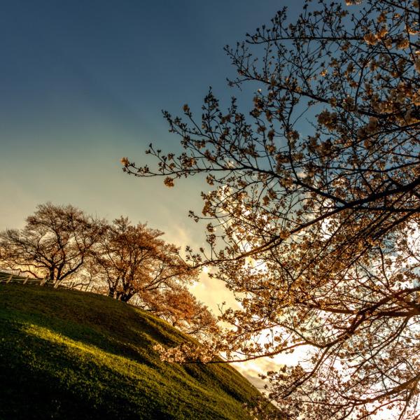 行田 さきたま古墳公園の夕景