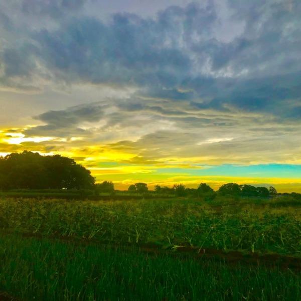 武蔵野の日没