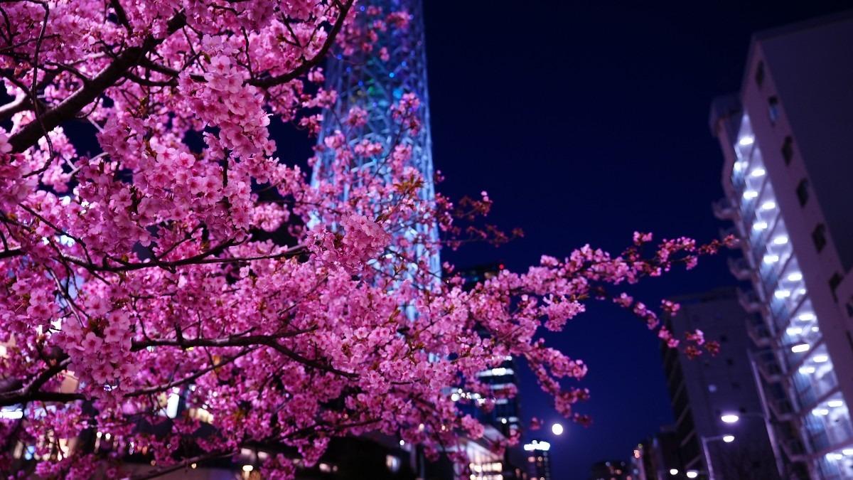 河津桜2021💖/スカイツリー:満月コラボ