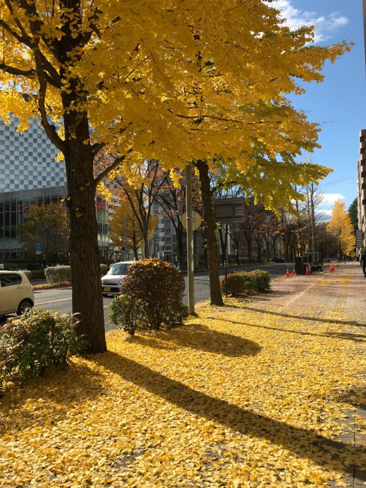 秋から冬への過渡期