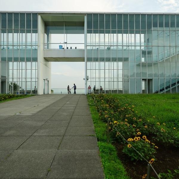 向日葵2020彩🌻/夏を先取り:葛西臨海公園