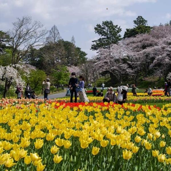 浜松フラワーパークの桜 8