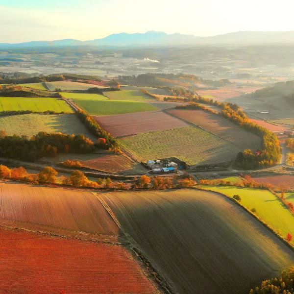 収穫期を迎える中富良野の朝