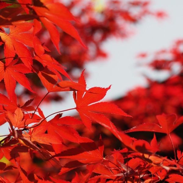 深緑の中に赤紅葉