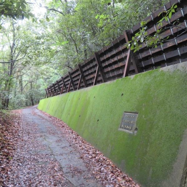 緑の苔の擁壁