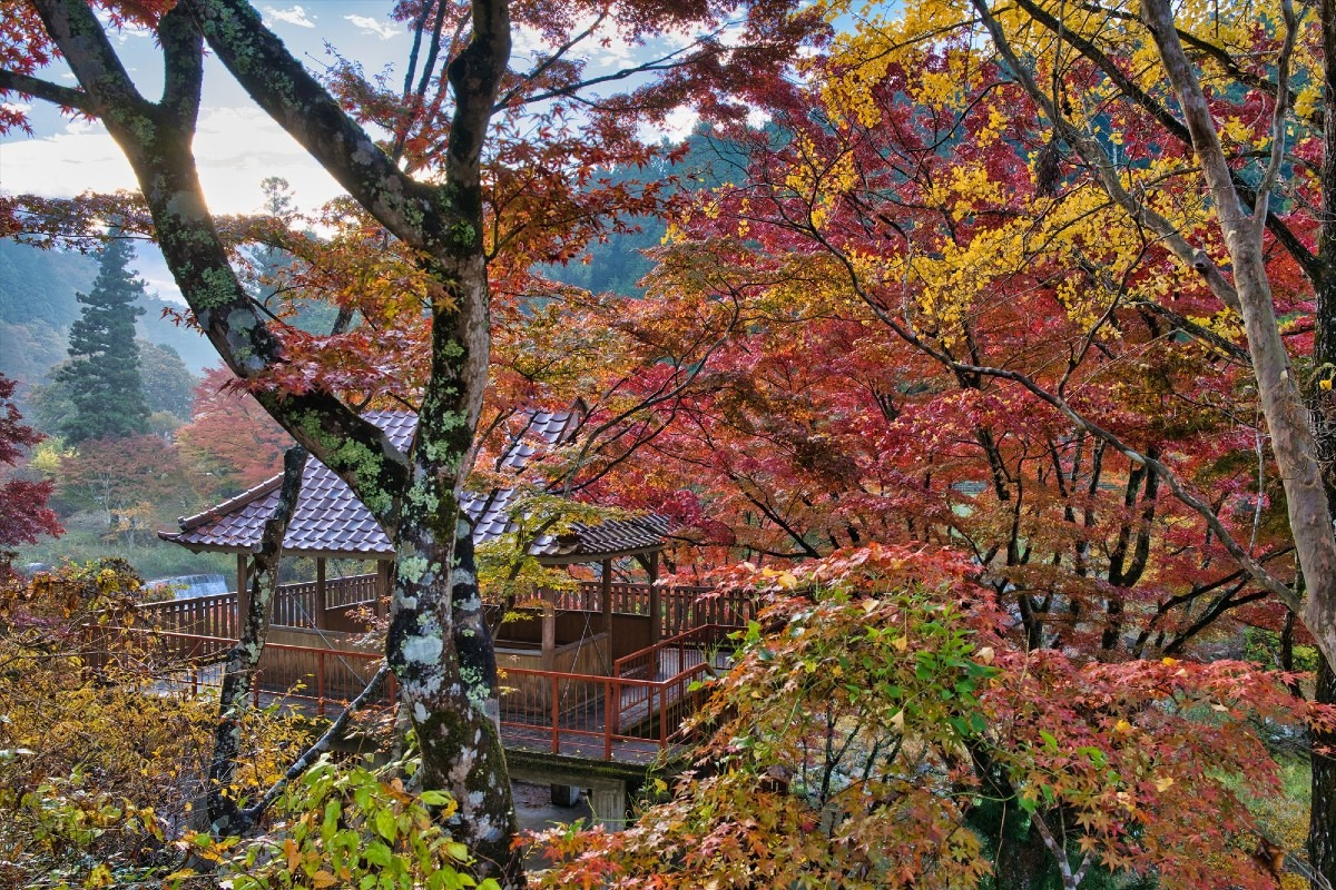 大井平公園の紅葉 1