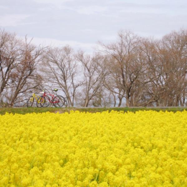春先取り・寒咲き菜花