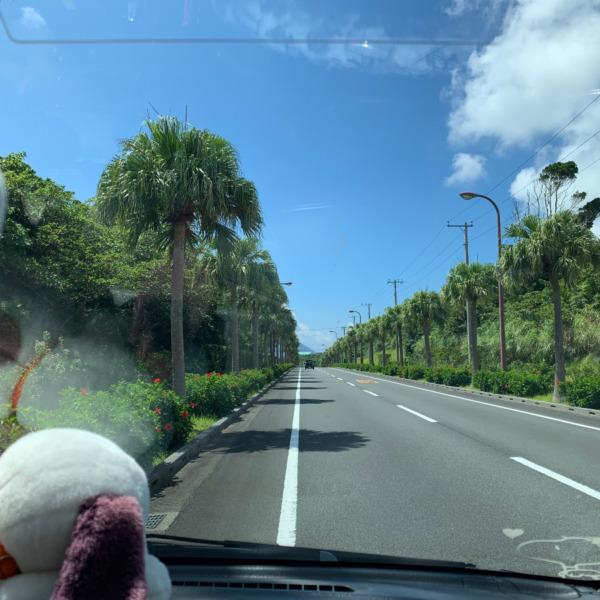 八丈島 夏のドライブ