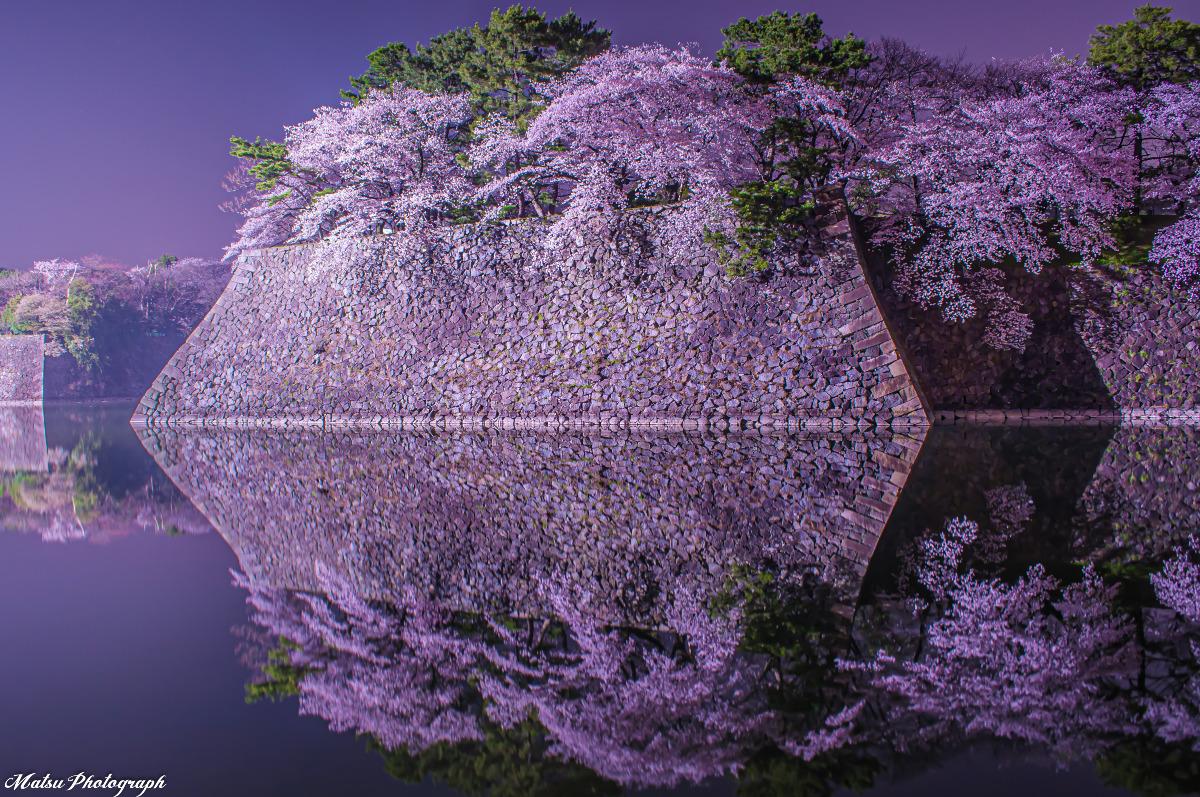 名古屋城 お堀の桜