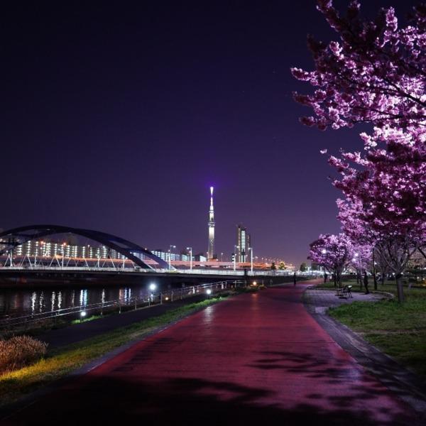 ピンクの香り:スカイツリーと夜桜コラボ✨