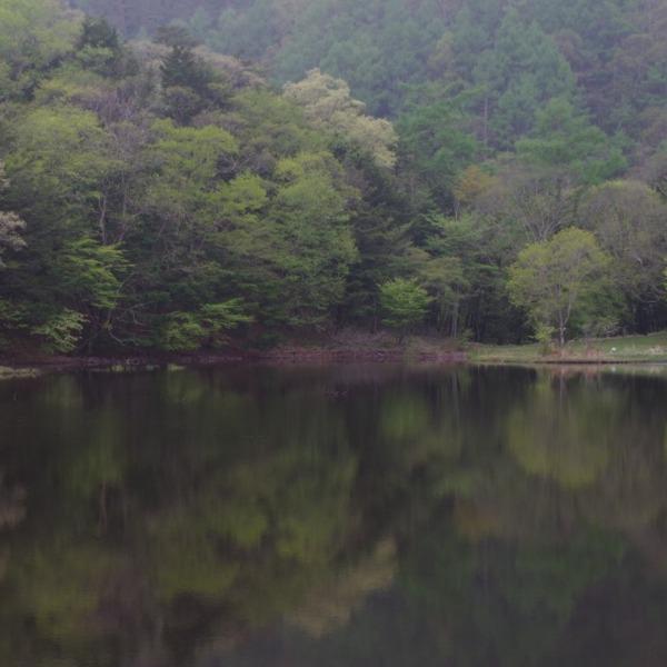 「新緑の椹池」