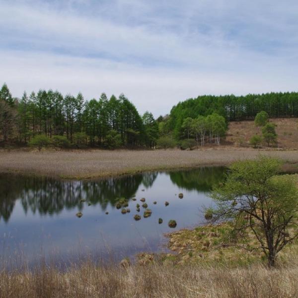 「谷地坊主のある池」