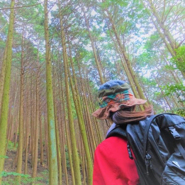 【野呂山】広島から気軽に行ける森林浴スポット!