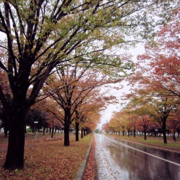 滋賀大学 キャンパスに続く道