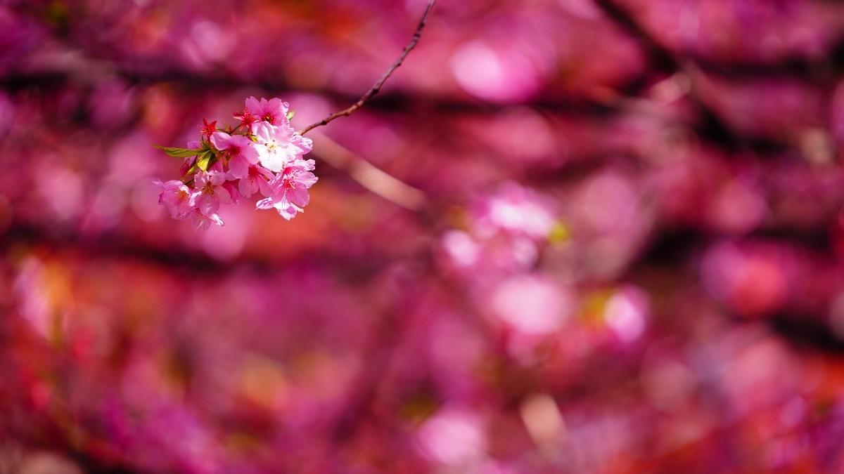さくら2021💖春の風/蔵前駅付近