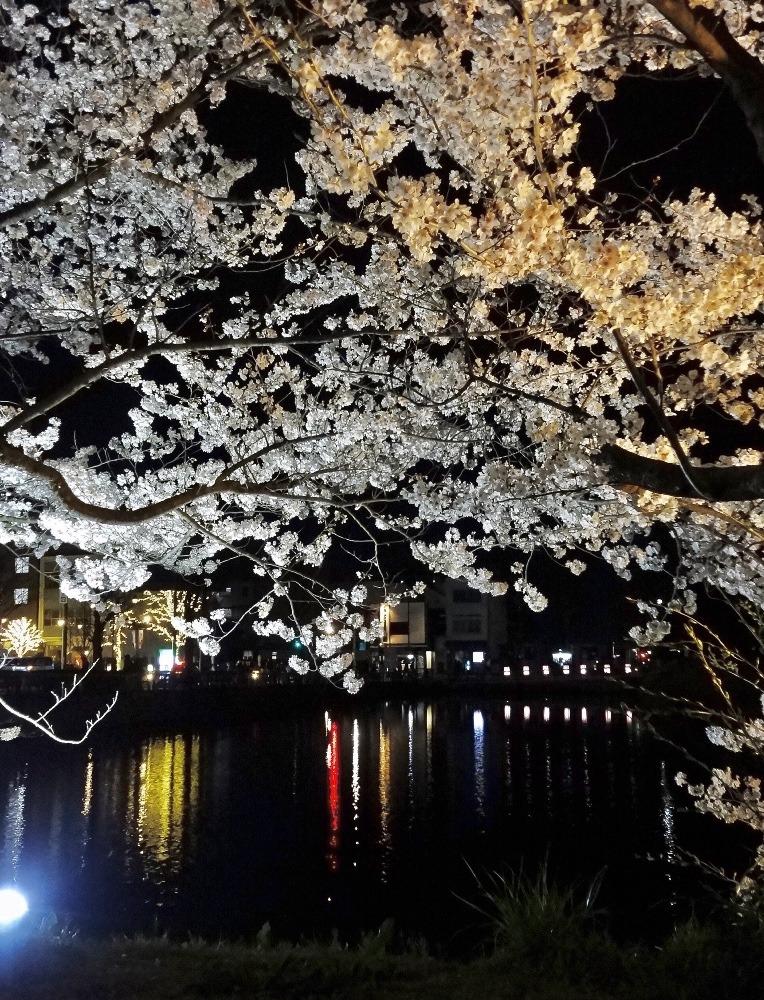 お堀と夜桜2021