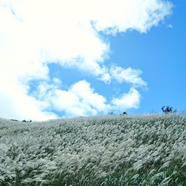 すすきの高原