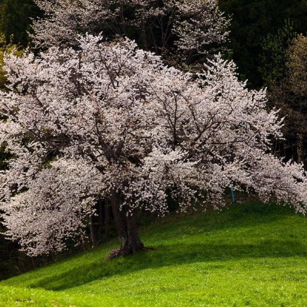 遅い高原の春