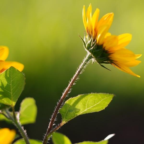 ひまわり2020🌻/葛西臨海公園:太陽の恵み✨