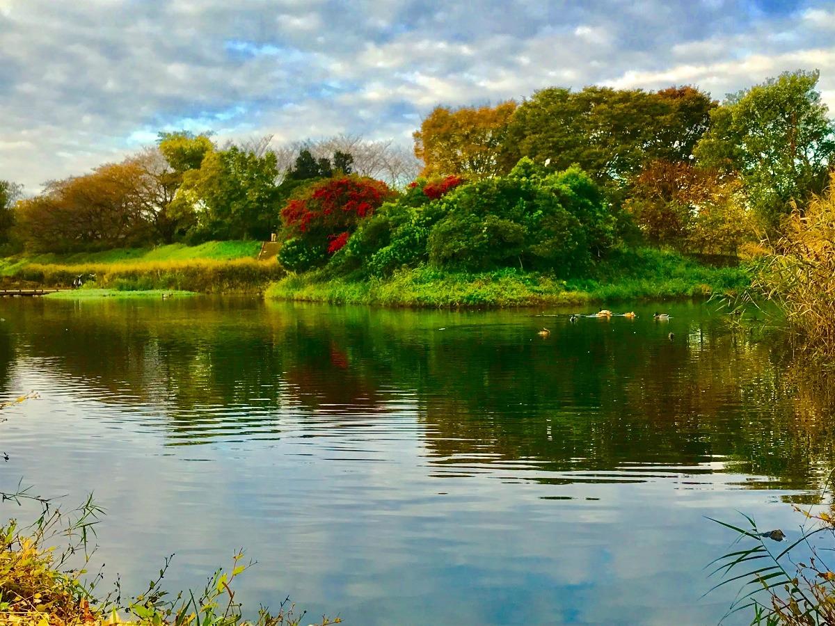 武蔵野の水辺