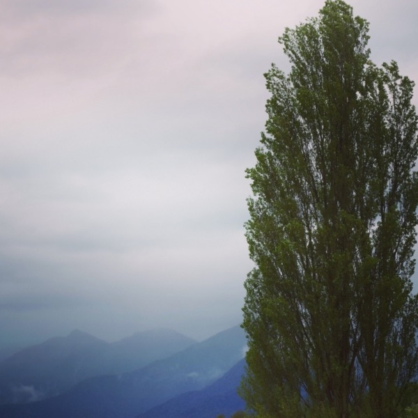 「ポプラの木と霞む南アルプスの山々」