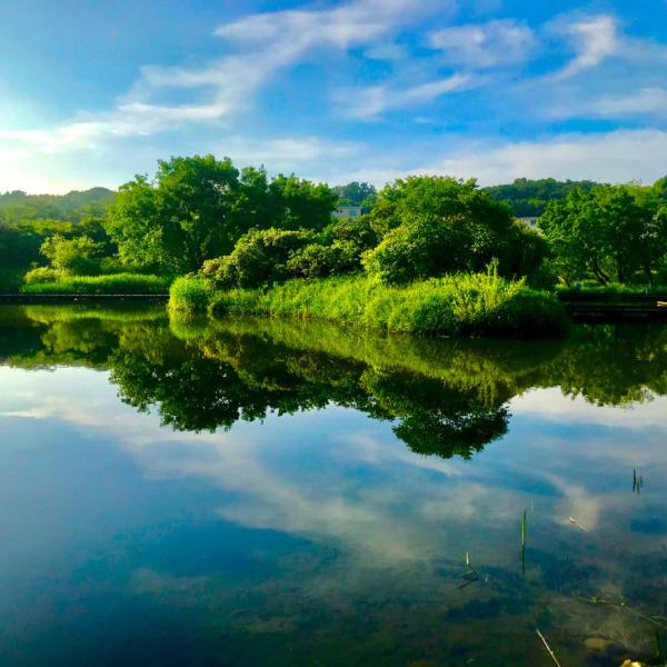 武蔵野の水辺が描く水鏡
