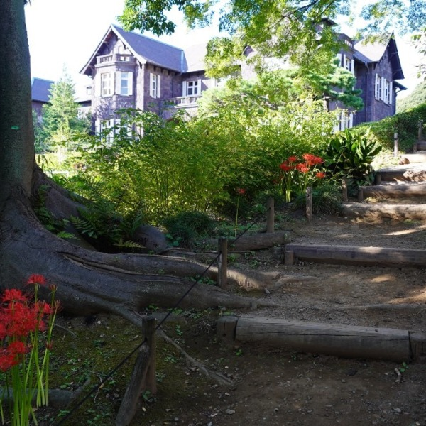 自然界もお着換準備中💖/旧古河庭園