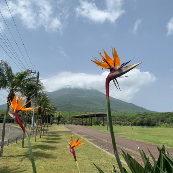 八丈の花と山
