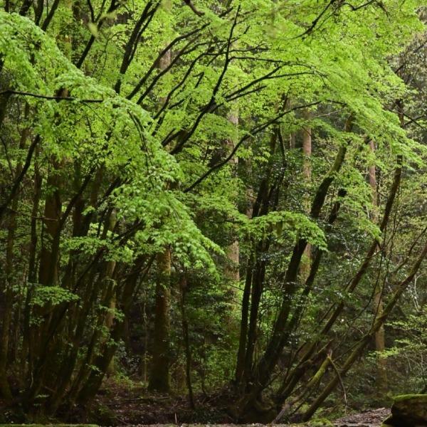 悠久の森にて 3