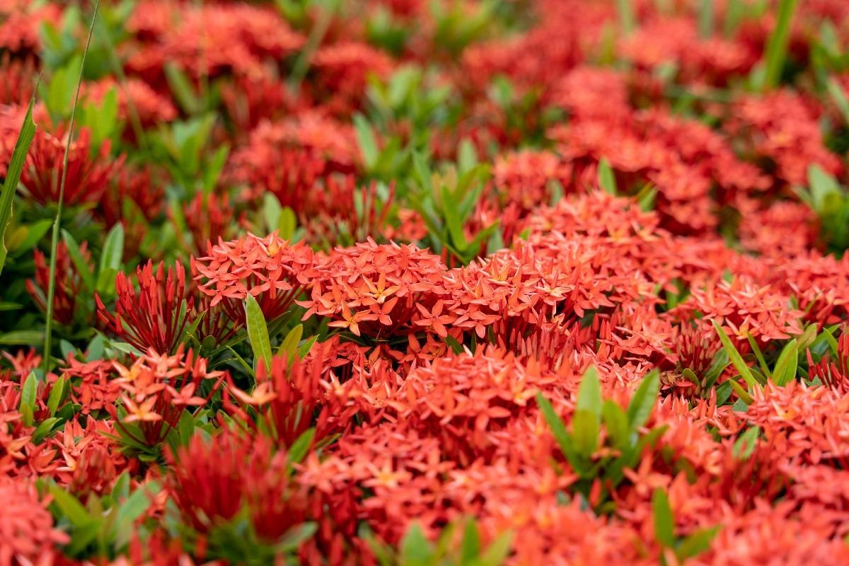 赤い花的なやつ