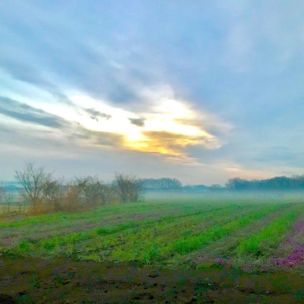 朝靄の武蔵野風情