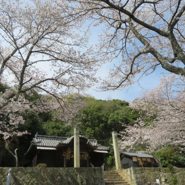ぐるっと'杉谷の里山歩き'軍神社の桜