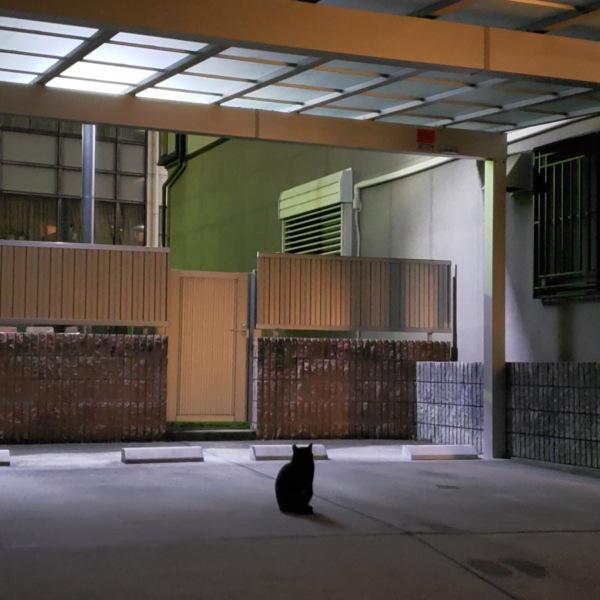ガレージに佇む猫