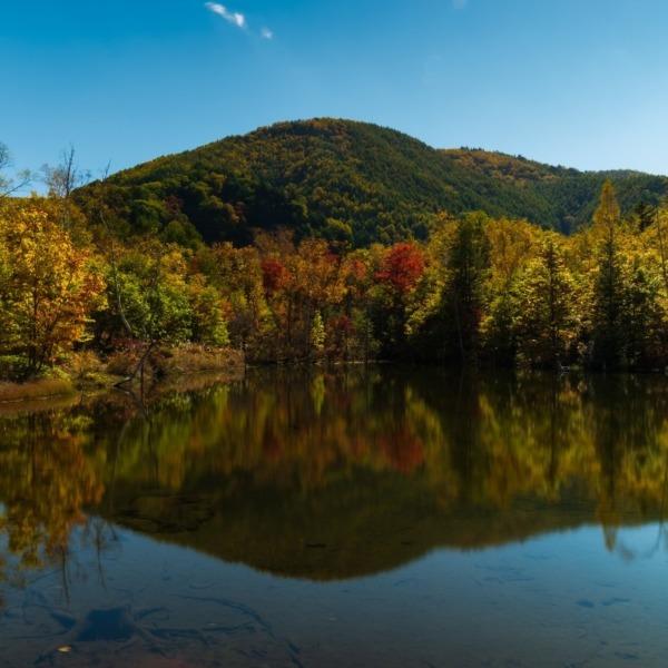 秋の乗鞍高原紅葉(まいめの池)